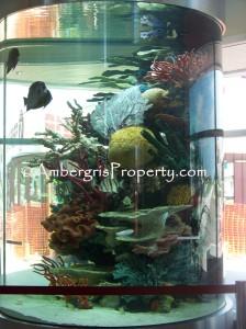 Fishes swim freely in this 9 ft aquarium